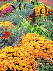 Fall Garden View