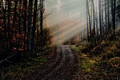 Wie schön es ist im Wald zu wandern ... How beautiful it is to walk in the forest ...