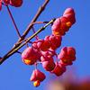 Letzte Sonnentage im Oktober - Last sunny days in October