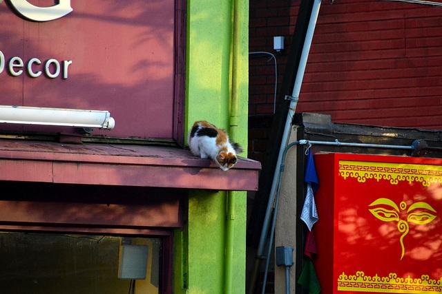 Canada 2016 – Toronto – Cat