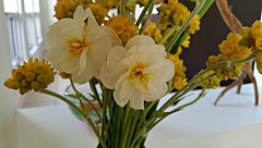 Daffodils and conostylis