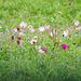Day 2, wildflowers near Newbury Park Hummingbird Centre