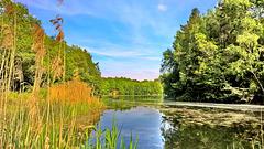 Mühlheim am Main - Oberwaldsee