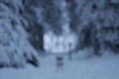 Jack Russell Terrier Clifford DSC00069