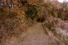 couleurs d'automne campagne du Berry