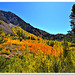Goldilocks : timing is just right (Autumn in the Sierra Nevada)