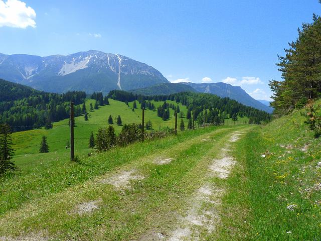 Almwiesen unterm Schneeberg