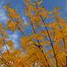 Hojas doradas de los jardines de la UAM de Madrid