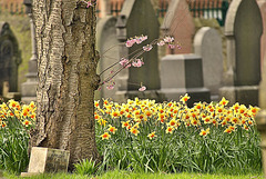 """New life """"springing up"""" in Wallsend Cemetery"""