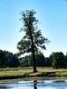 Baum am Heusteg (2 PiP)