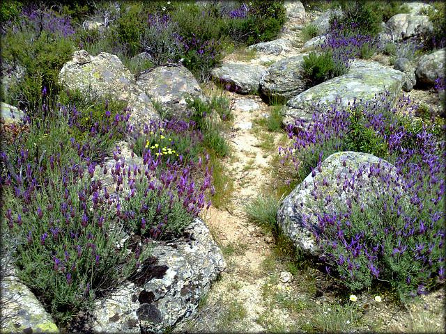 An aromatic path.