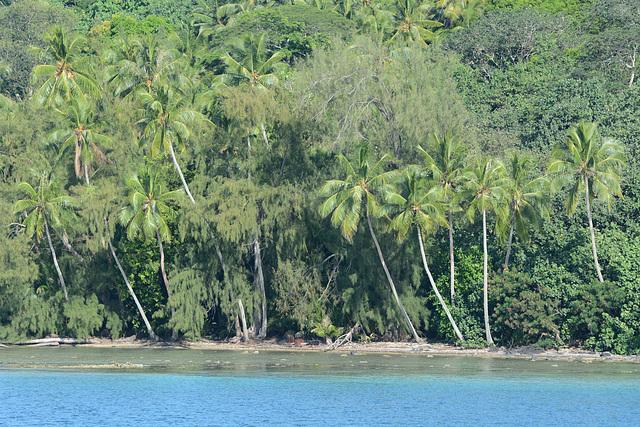Polynésie Française, Bora Bora, Dense Forest on the Shore of the Island of To'opua