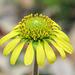 Day 2, flower at Newbury Park Hummingbird Garden, South Texas
