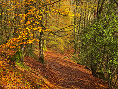 Autumn at Waggoners Wells