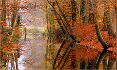 Reflections in Autumn...