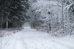 Winterlandschaft DSC00047