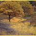 Moor autumn