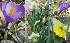 Colors of Spring -