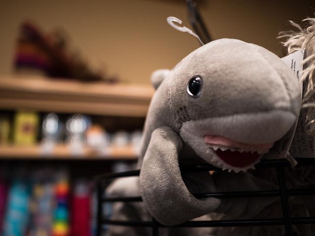Stuffed Shark