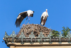Storks (PiP)