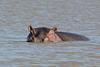 Ethiopia, Tana Lake, The Hippopotamus