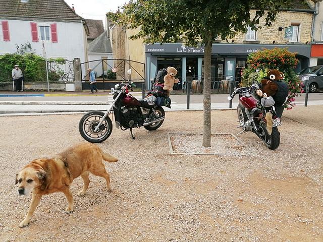 Les peluches ne sont pas que sur les motos! [ON EXPLORE]