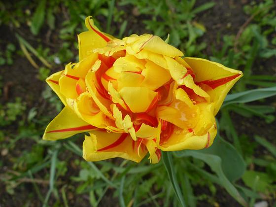 Wenn Blumen sprechen - se floroj parolas