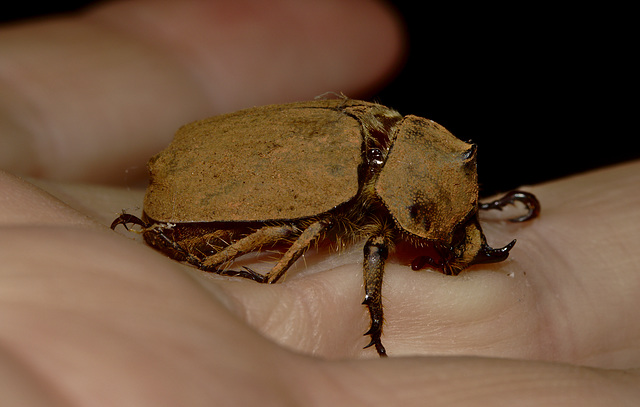Beetle EF7A5128