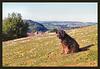 dog on Agaton Hill