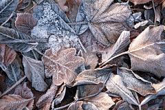 Givre et tapis de feuilles mortes