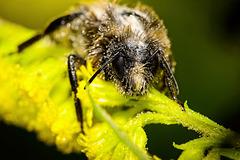 ........die Biene hatte es auch schon mal leichter.....