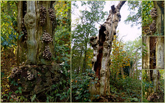 The transience of a Tree. The middle picture is from yesterday, the rest from one year ago...