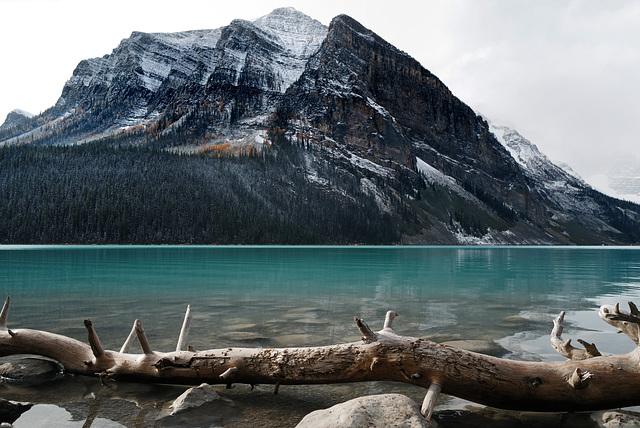 Lake Louise, Rockies  L1010593