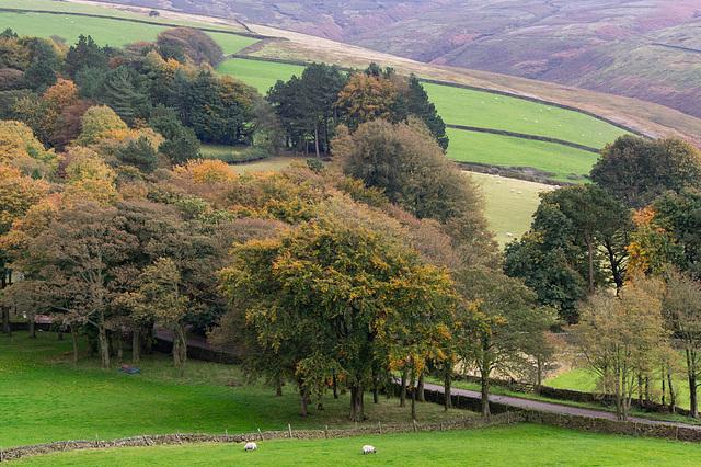 Moorfield Trees Autumn 2019