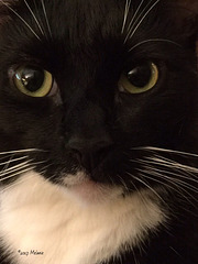 Our cat, Max