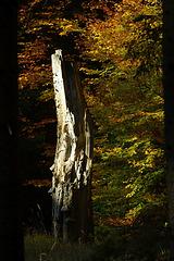 Herbst & mehr