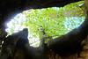 600 jährige Linde in Schmorsdorf bei Pirna