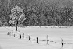 H.F.F. - Winter Dreams #3
