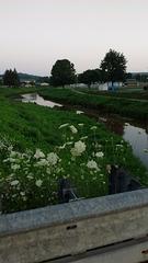 Fleurs, clôture et rivière