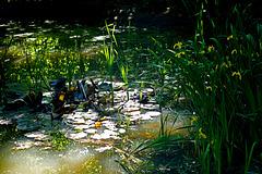 Ein geheimnisvoller Waldtümpel - A mysterious forest pond