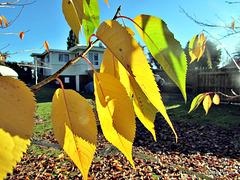 Leaf Curtain.