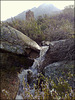 Mountain stream and rosemary