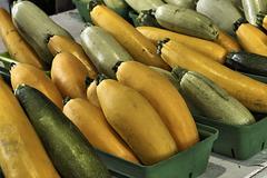 Zucchini – Marché Jean-Talon, Montréal, Québec, Canada