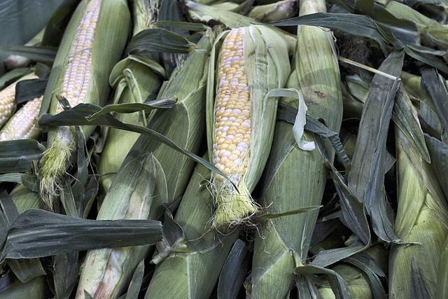 Corn Cobs – Marché Jean-Talon, Montréal, Québec, Canada