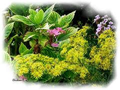 Fleurs des villes et fleurs des champs ***  City flowers and field flowers