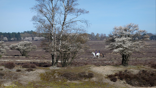 Horse riding..