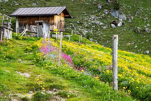 H.F.F. - at 'Grander Alp'