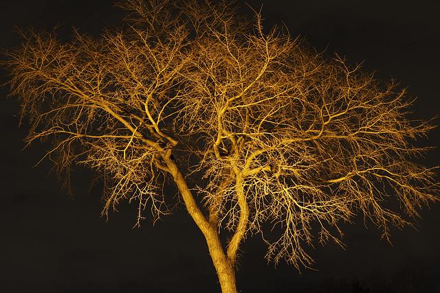 Elm in a Spotlight 02