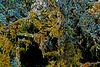 Die unbekannte Welt der Flechten und Moose - The unknown world of lichens and mosses