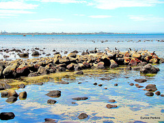 Altona Beach Wildlife On The Rocks.